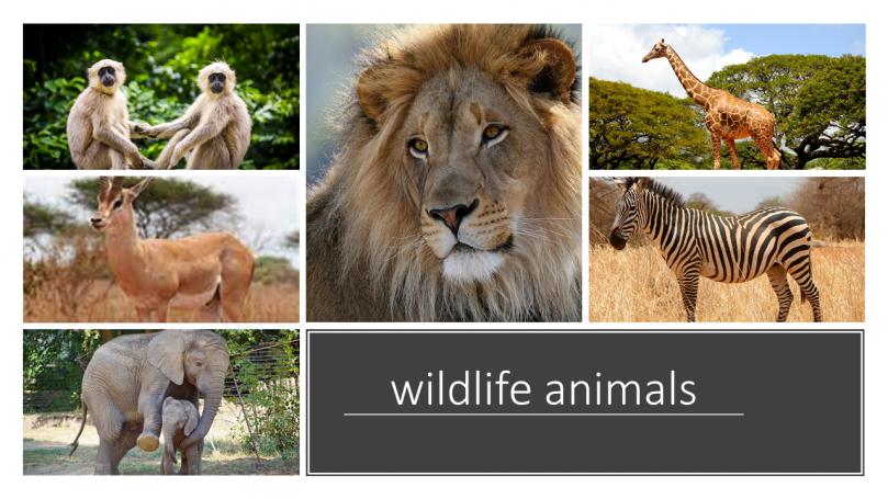 """""""Creating your own safari tour"""" – Auditive Medien als Anlass zur Kompetenzerweiterung"""